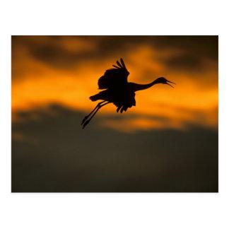 USA, New Mexico, Bosque del Apache National Postcard