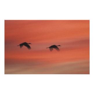 USA, New Mexico, Bosque del Apache Wildlife Photographic Print