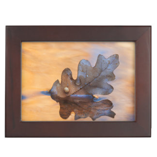 USA, New Mexico. Oak leaf in stream Keepsake Boxes