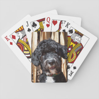 USA, New Mexico. Portuguese Water Dog Portrait Playing Cards