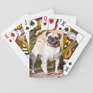 USA, New Mexico. Pug Standing In High Grasses Poker Deck