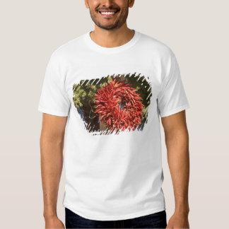 USA, New Mexico, Santa Fe: Downtown Santa Fe, 2 T Shirts