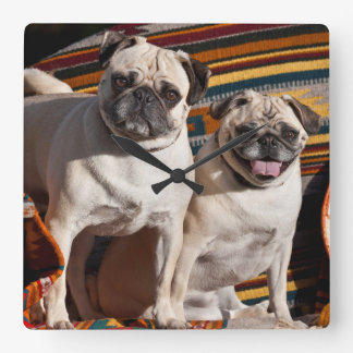 USA, New Mexico. Two Pugs Together Square Wall Clock