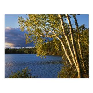 USA, New York, Adirondack Park And Preserve Postcard