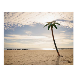 USA, New York City, Coney Island, palm tree on Postcard