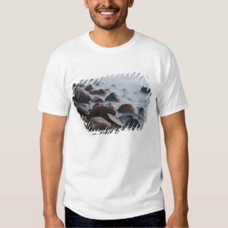 USA, New York, East Hampton. Ocean surf at Shirts