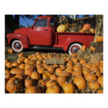 USA, New York, Peconic, pumpkin farm with pickup Poster