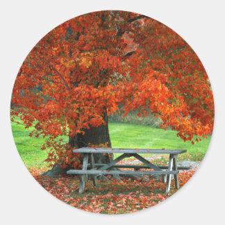 USA, New York, West Park. Bench Under Maple Round Sticker