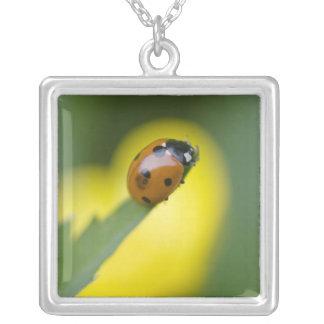 USA, North Carolina, Ladybug on tip of leaf. Square Pendant Necklace