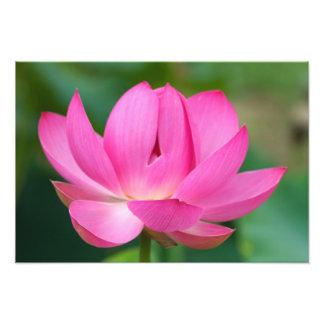 USA; North Carolina; Lotus blossom Photo Art