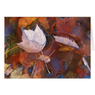 USA, Northeast, Fall leaves in puddle with Card