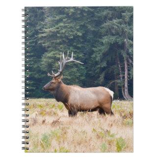 usa notebooks
