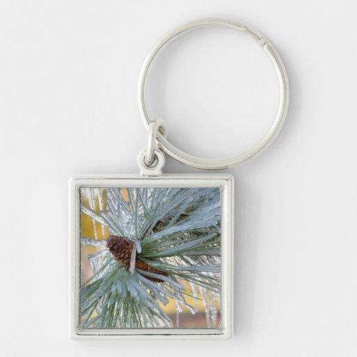 USA, Oregon, Bend. Ponderosa pine needles are Key Chain