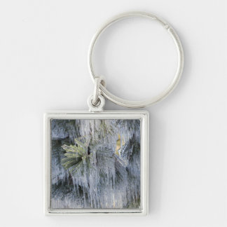 USA, Oregon, Bend. The ice on Ponderosa pine Silver-Colored Square Key Ring