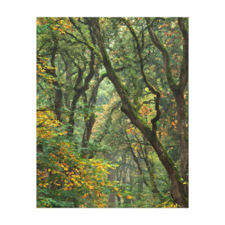 USA, Oregon, Champoeg State Park. Autumn Stretched Canvas Prints