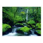 USA, Oregon, Columbia River Gorge National 2 Postcard