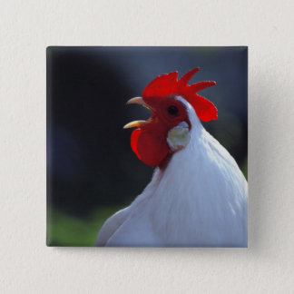 USA, Oregon, Eugene. A white rooster greets 15 Cm Square Badge