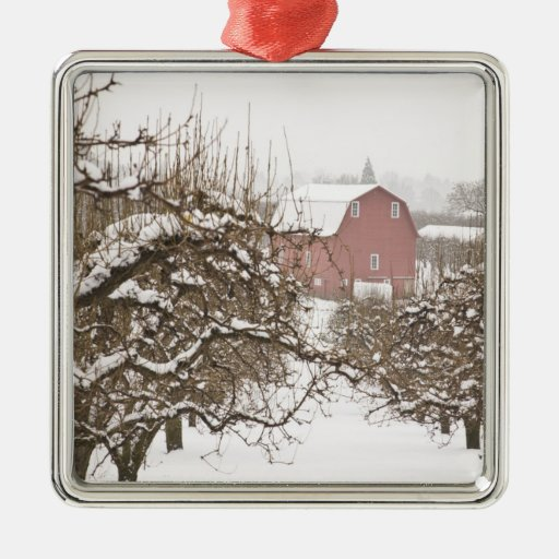 USA, Oregon, Hood River. Snow covered Apple Ornaments