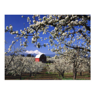 USA, Oregon, Hood River Valley, Pear orchard Postcard
