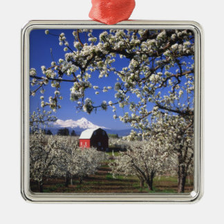 USA, Oregon, Hood River Valley, Pear orchard Silver-Colored Square Decoration