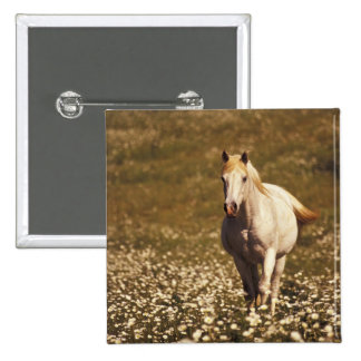 USA, Oregon. Horse in a field of daisies 15 Cm Square Badge