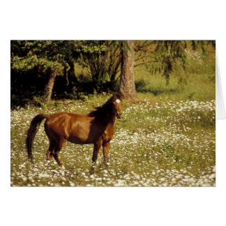 USA, Oregon. Horse in field of daisies Greeting Card
