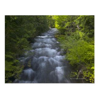 USA, Oregon, Linn County, View of Marion Creek Postcard
