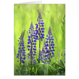 USA, Oregon, Mt. Hood National Forest, Lupine Card