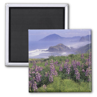 USA, Oregon, Nesika Beach. Lupine and Oregon Magnet