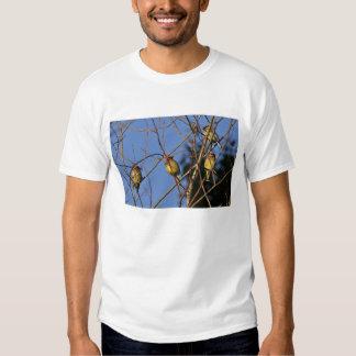 USA, Oregon, Portland. Cedar waxwing on tree T-shirts