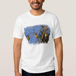 USA, Oregon, Portland. Cedar waxwing on tree Tee Shirts