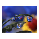 USA, Oregon, Portland, Close-up of ladybird Postcard