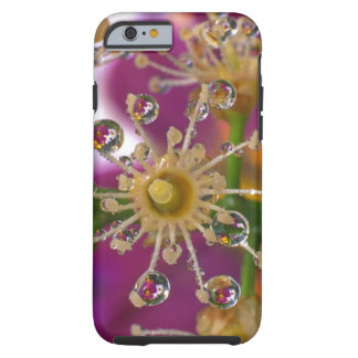 USA, Oregon, Portland. Cosmos flowers reflect in Tough iPhone 6 Case