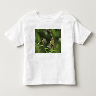 USA, Oregon, Portland. Male cedar waxwing T Shirt