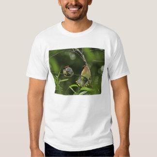 USA, Oregon, Portland. Male cedar waxwing T-shirts