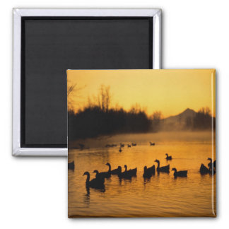 USA, Oregon, Portland. Waterfowl in Columbia Square Magnet