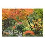 USA, Oregon, Portland. Wooden bridge and maple Photograph