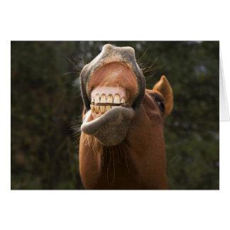USA, Oregon, Seneca, Ponderosa Ranch. A horse Greeting Card