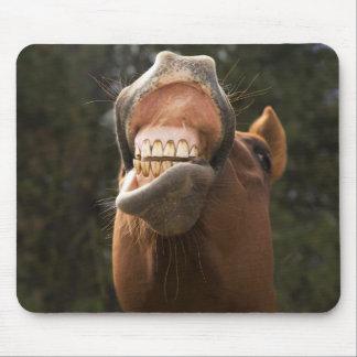 USA, Oregon, Seneca, Ponderosa Ranch. A horse Mouse Pad