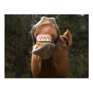 USA, Oregon, Seneca, Ponderosa Ranch. A horse Postcard