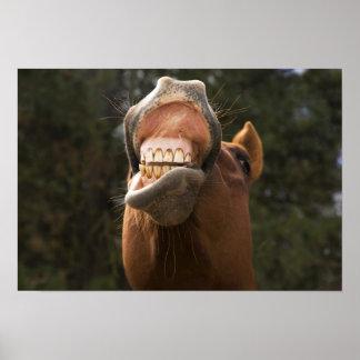 USA, Oregon, Seneca, Ponderosa Ranch. A horse Poster