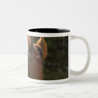USA, Oregon, Seneca, Ponderosa Ranch. A horse Two-Tone Mug