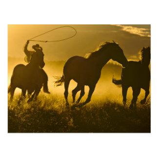 USA, Oregon, Seneca, Ponderosa Ranch. Postcard