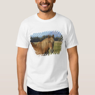 USA, Oregon, Sisters, view of Three Sisters, 2 T-shirts