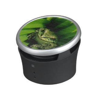 USA, Oregon, Treefrog in False Hellebore Speaker