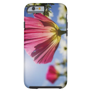USA, Oregon, Willamette Valley, Close UP of Tough iPhone 6 Case