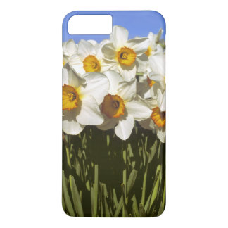 USA, Oregon, Willamette Valley. Daffodils grow iPhone 7 Plus Case