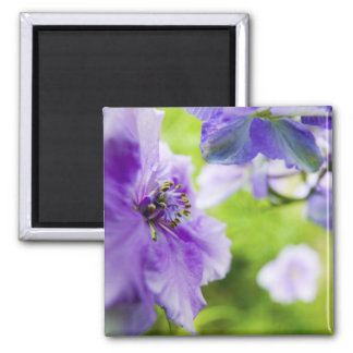 USA, Oregon, Willamette Valley, Larkspur Close 2 Magnet