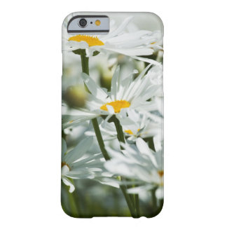 USA, Oregon, Willamette Valley, Selective iPhone 6 Case