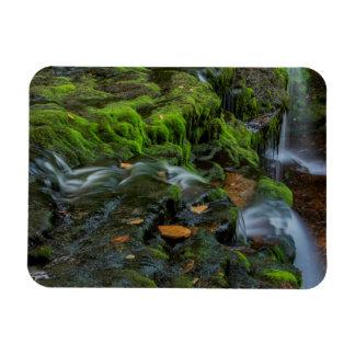 USA, Pennsylvania, Benton, Ricketts Glen State Rectangular Photo Magnet